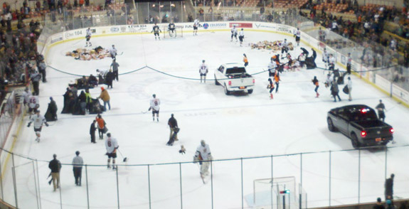 SF Bulls clean up teddy bears on the ice